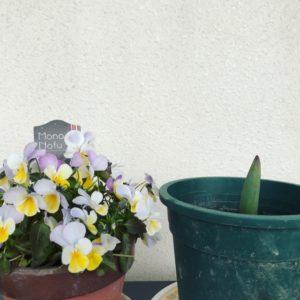 viola&tulip